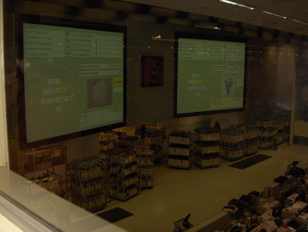 Screens in front of buyers give details about flowers being auctioned