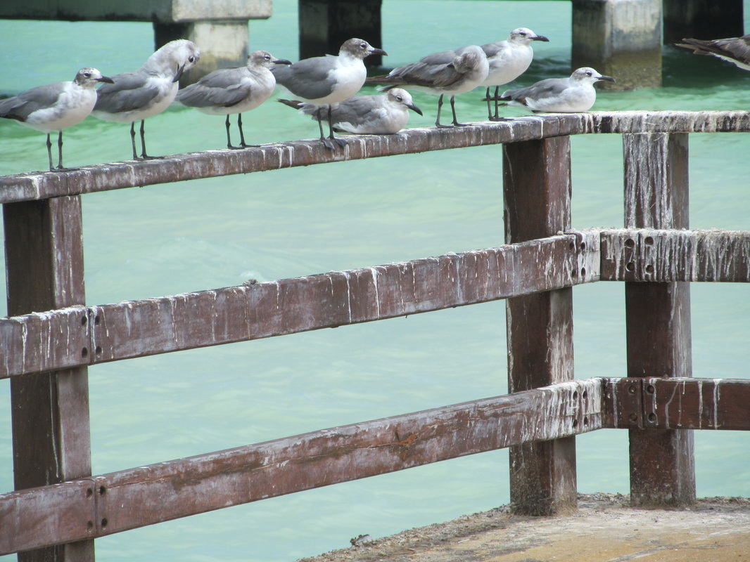 Birds in Progreso Mexico